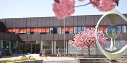 Hovedbiblioteket med springvand og kirsebærtræer